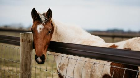 Image of a horse leaning its head over a fence